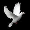 Catequistas, promotores da paz
